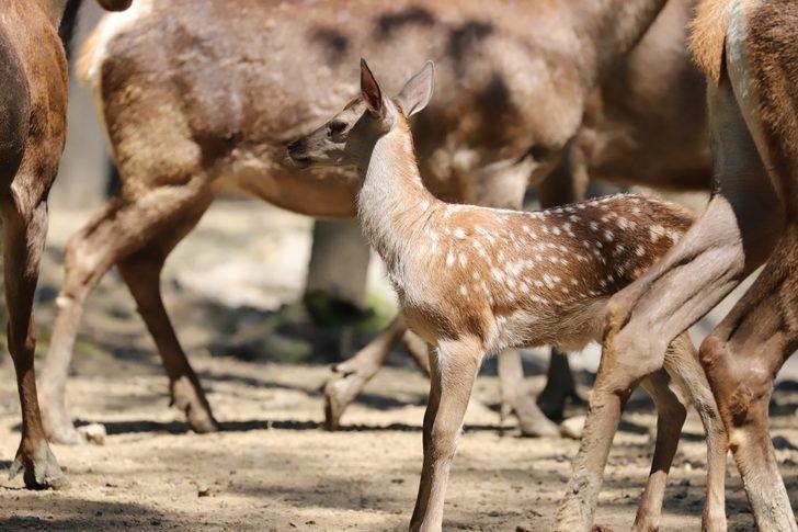 Ormanya'da hayvan popülasyonu gün geçtikçe artıyor