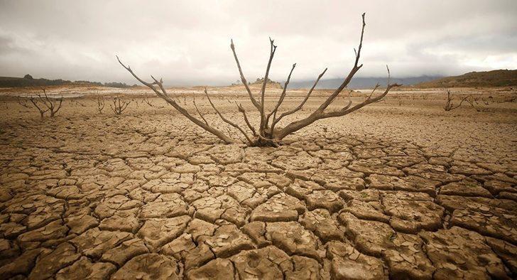 Aydın TEMA erozyon ve çölleşmeyle mücadeleye dikkat çekti