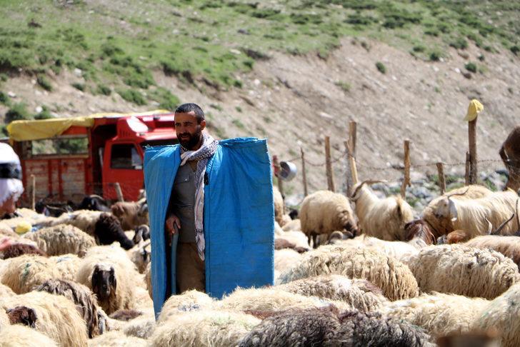 Üniversite mezunu genç 1500 koyuna çobanlık yapıyor
