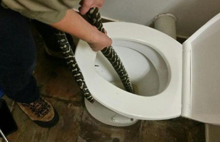 Yılanın bu tuhaf eylemine tanık olan bilim insanları bile gözlerine inanamıyor!