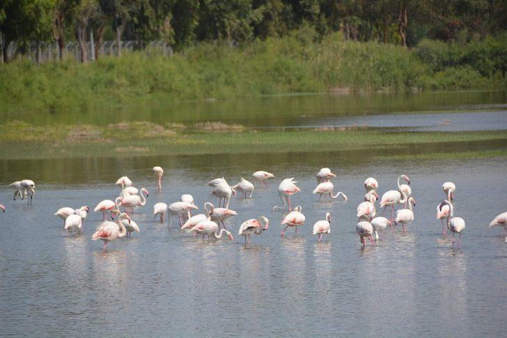 Aliağa'da Kuş Cenneti her mevsim rengarenk