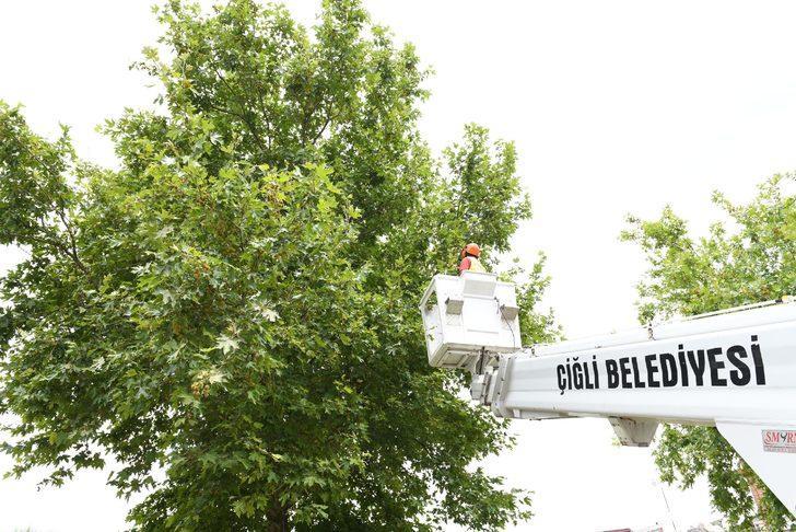 Ağaçtan düşen karga yavrusu kurtarıldı