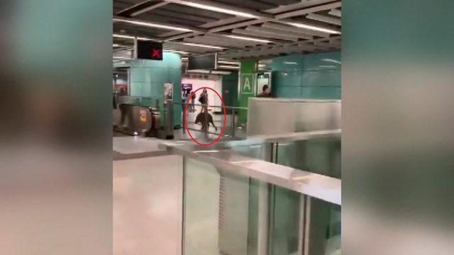 Çin'de metro istasyonuna giren yaban domuzu, kadını yaraladı