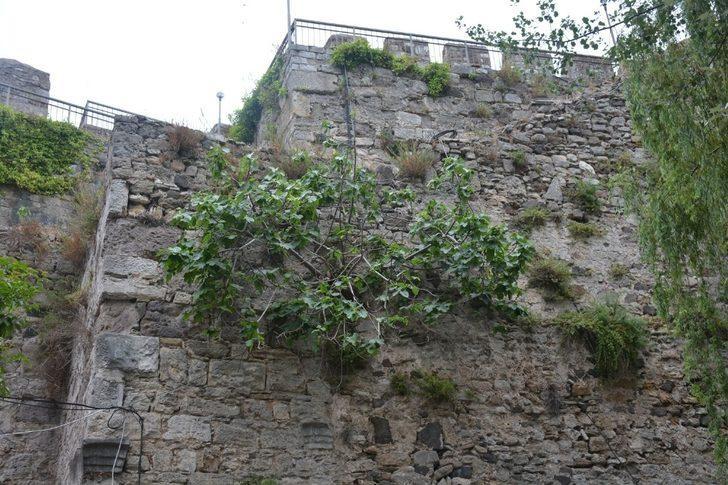 """Ahmet Çobanoğlu; """"Kaledeki tarihi dokuyu bozmadan bitkilerin çıkarılması da bilimsel bir çalışma"""""""