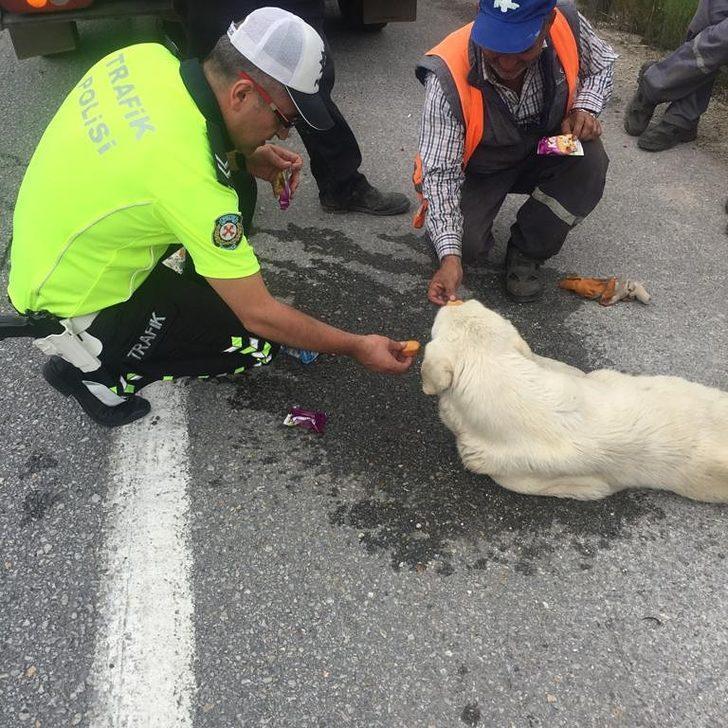 Bitkin düşen köpeğe polis şefkati