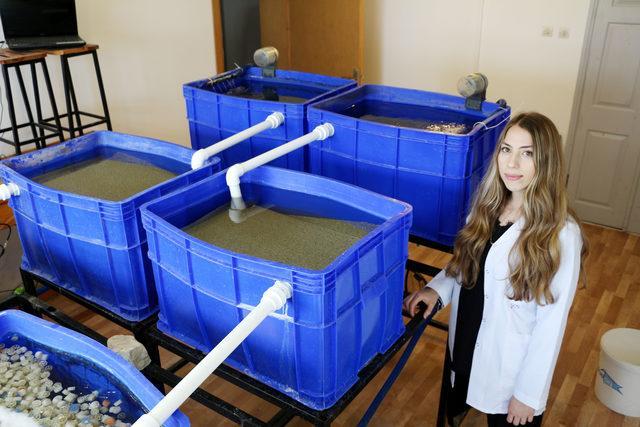 Balık üretilen suyu işleyip, marul yetiştirdi