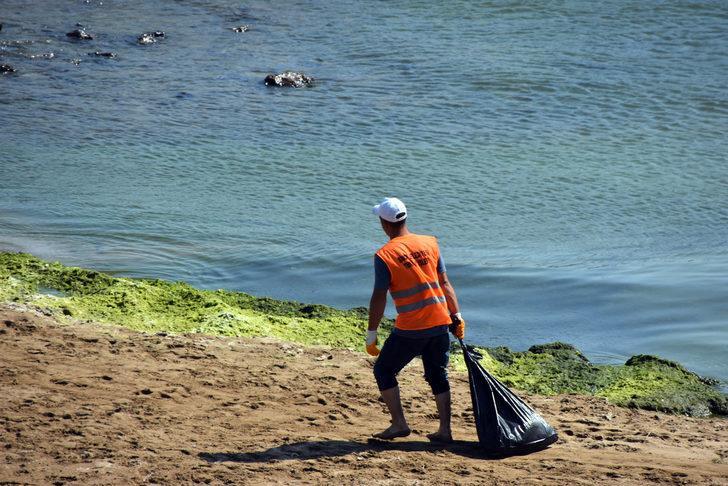 Karadeniz'in en uzun sahili yosunlardan temizleniyor