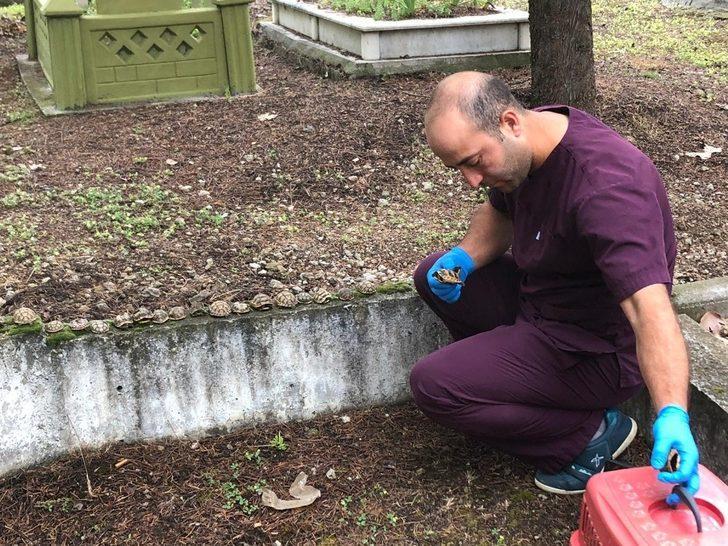 Mezarlıktaki kaplumbağaların sırrı çözüldü
