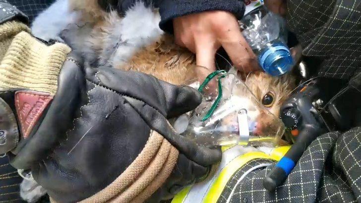 Rus itfaiyeciler yangından kurtardıkları kediyi hayata döndürdü