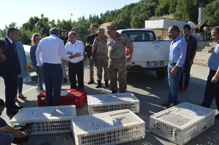 Şırnak'ta kınalı keklikler doğaya salındı