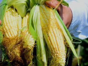 Emtia piyasasında mısır, haziran ayında 5 yılın en yüksek seviyesini gördü.