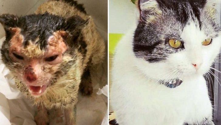 İzmirli veterinerin 'kapısını çalan' sokak kedisi yeniden doğdu