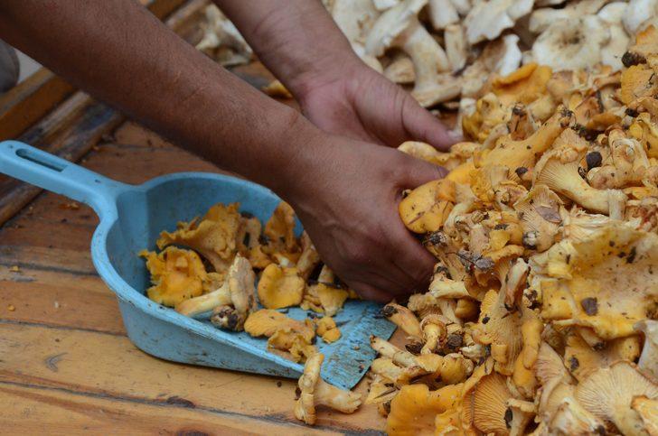 Talep çok fazla! Tavuk tirmitin kilogramı 20 TL'den satılıyor!