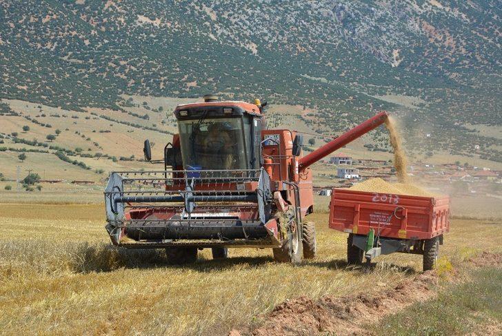 Buğday hasatı başladı