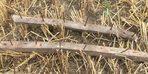 Hasat öncesi buğday tarlasında çivili tahtalar buldu