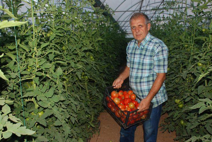 Kış aylarında 7 liraya kadar çıkan domates, 2 liraya kadar düştü