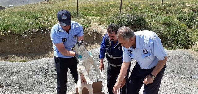 Yaralı köpeğe belediye ekibi sahip çıktı