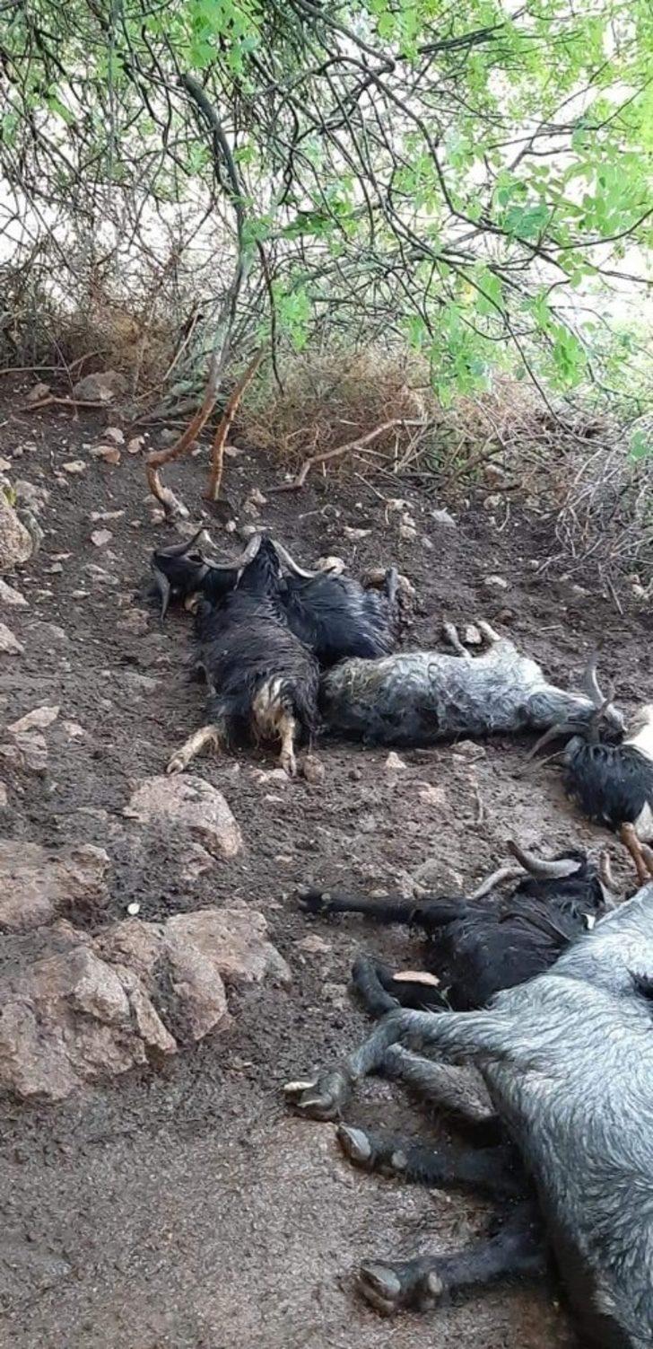 Ahıra yıldırım düştü, 10 küçükbaş hayvan telef oldu