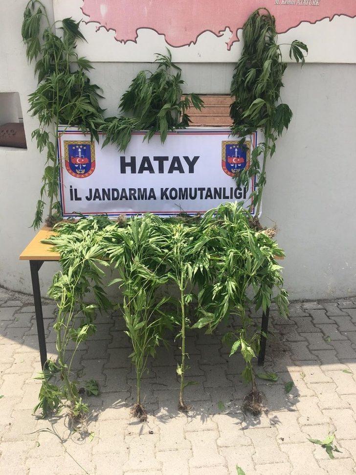 Hatay'da Hint keneviri operasyonu