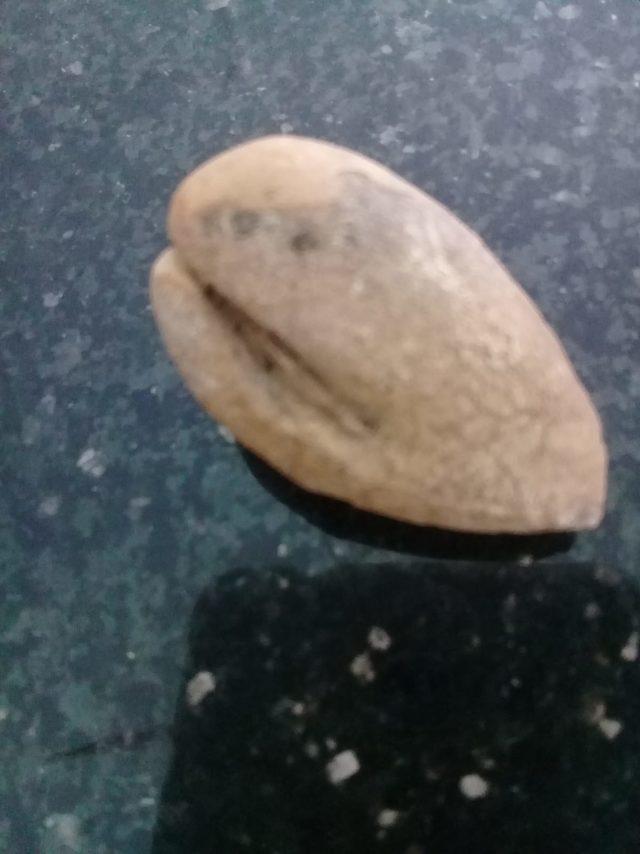 Kayısı fosili olduğu öne sürülen bulgu şaşırttı