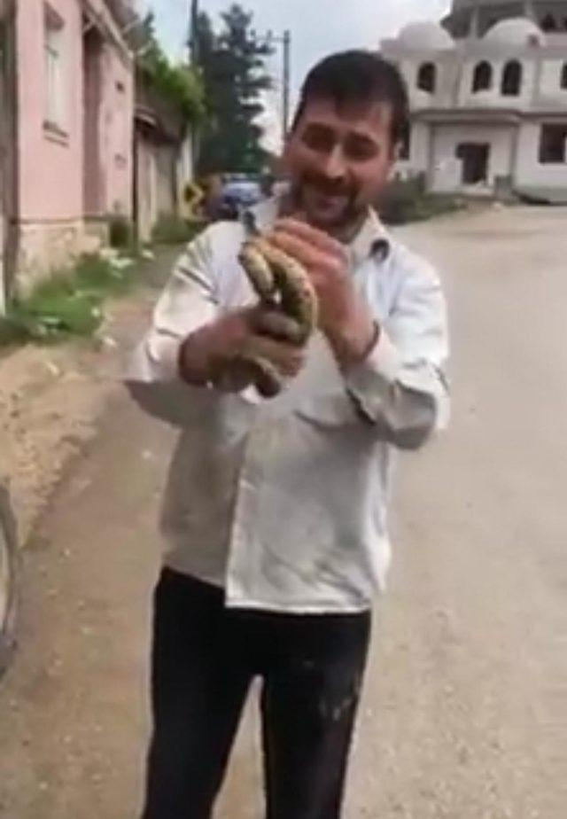 Çıplak eliyle yakaladığı yılanla oynadı