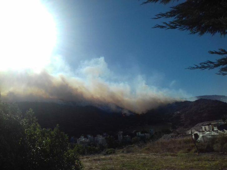 Dikili'de orman yangını (1)
