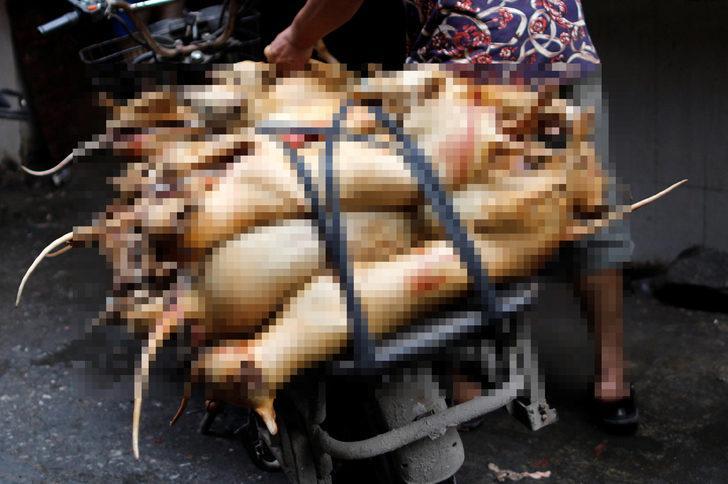 Çin'deki köpek eti festivali şoke ediyor! Binlerce köpeği diri diri yakıp...