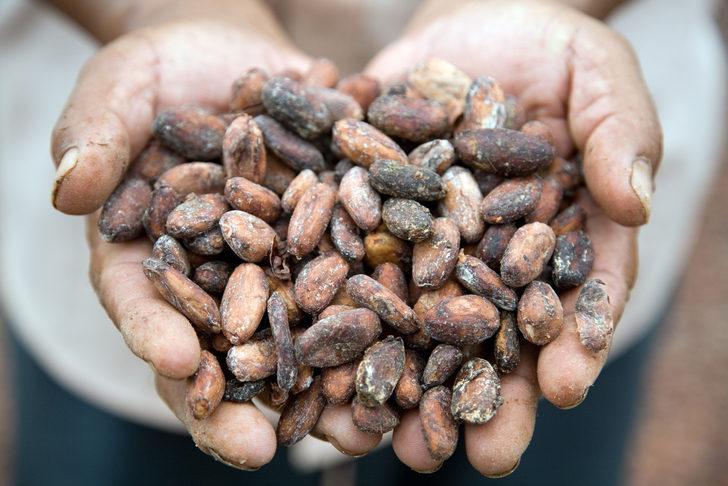 Kavrulmuş kahve veya kakao dişi bakterilere karşı korur