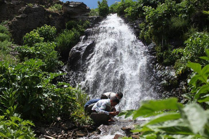 Ağrı'nın yeşil bahçesi: Miraşe Yaylası! Her noktası ayrı güzellikle bezeli