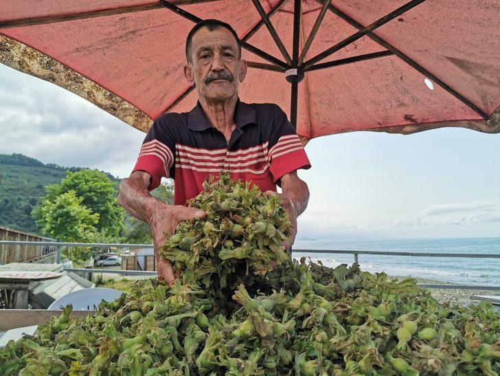 Karadeniz'de fındık tezgaha 15 liradan indi