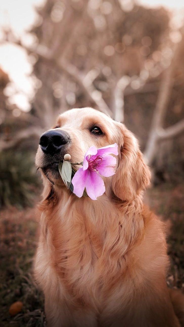 """Köpeğinizin size nasıl """"Seni Seviyorum"""" dediğini biliyor musunuz?"""