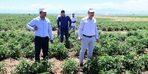 Yeşilyurt'ta yüzde yüz yerli tarımsal üretim devam ediyor