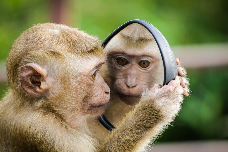 Rüyada maymun görmek ne demek? Rüyada maymun görmekle ilgili rüya tabirleri