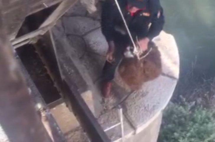 Köprü altında mahsur kalan koyun kurtarıldı