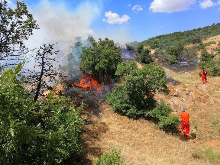 Köyde yangın çıktı, bazı ağaçlar zarar gördü