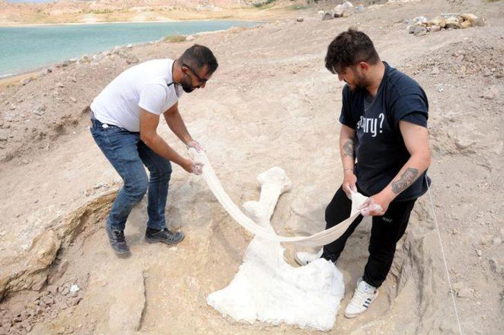 Çoban buldu: 7,5 milyon yıllık!