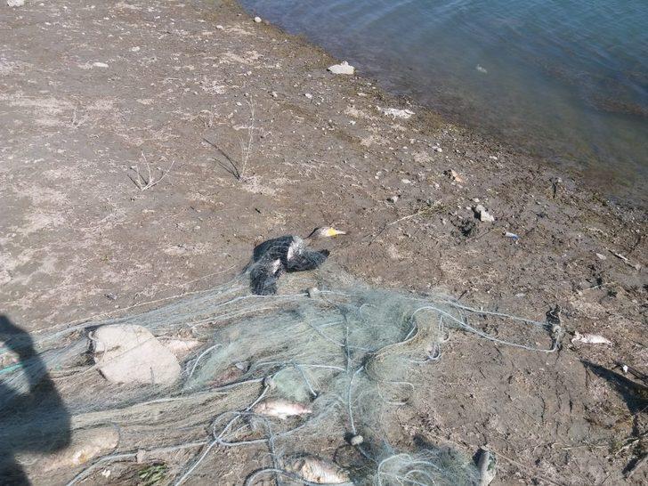 Kaçak avlanma yüzünden balıklar ve balıkçıl kuşları telef oldu
