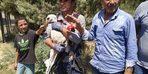 Siirt'te ayağı iplere dolanıp elektrik direğinde mahsur kalan leylek kurtarıldı