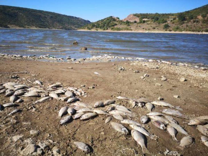 Boğazköy Barajı'nda kıyıya vuran ölü balıklar tedirgin etti