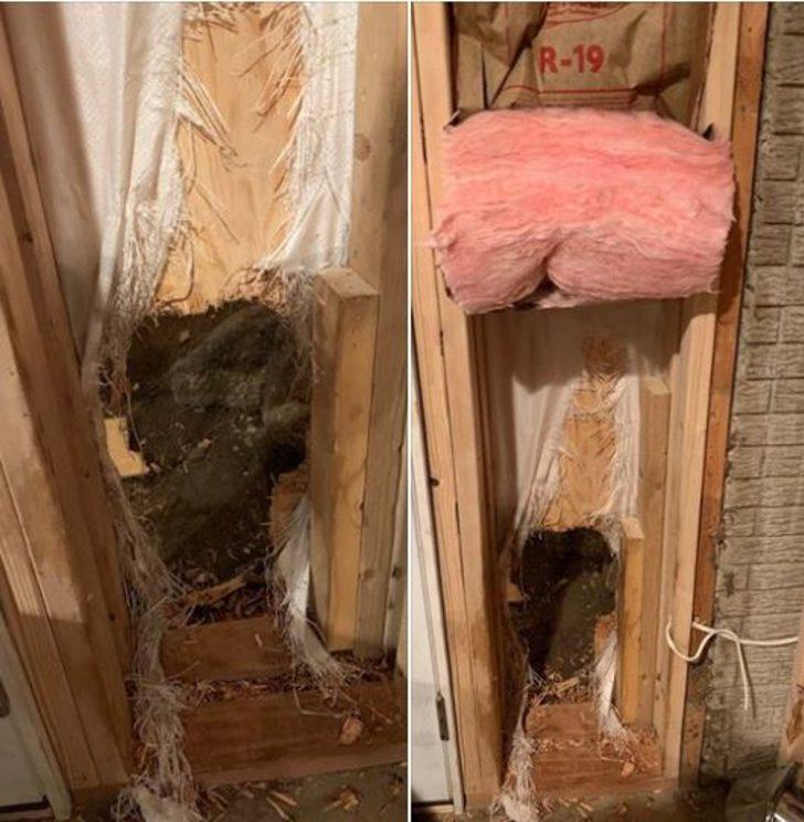 ABD'de bir ayı girdiği evden duvarı yıkarak kaçtı