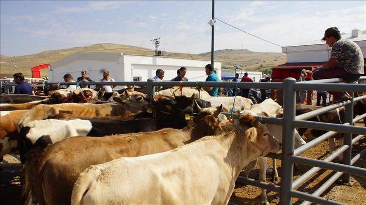 Et ve Süt Kurumu, elde kalan kurbanlıkları satın alacak