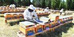 Tahtalı Barajında bal ormanı kuruldu sıra markalaşmada
