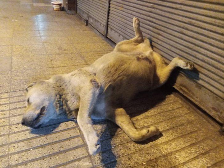 Öldü sanılan köpeğin uyuduğu anlaşıldı