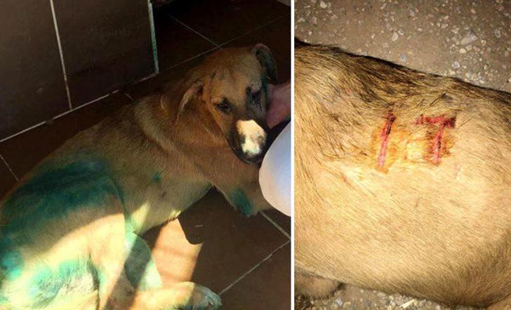 Köpeğe işkence yapıp, vücuduna kesici alet ile 'it' yazdılar