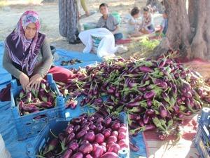 Patlıcanın kilosu tarlada 25 kuruş, pazarda 1.5 lira