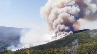 Milas'ta orman yangını! Giderek büyüyor