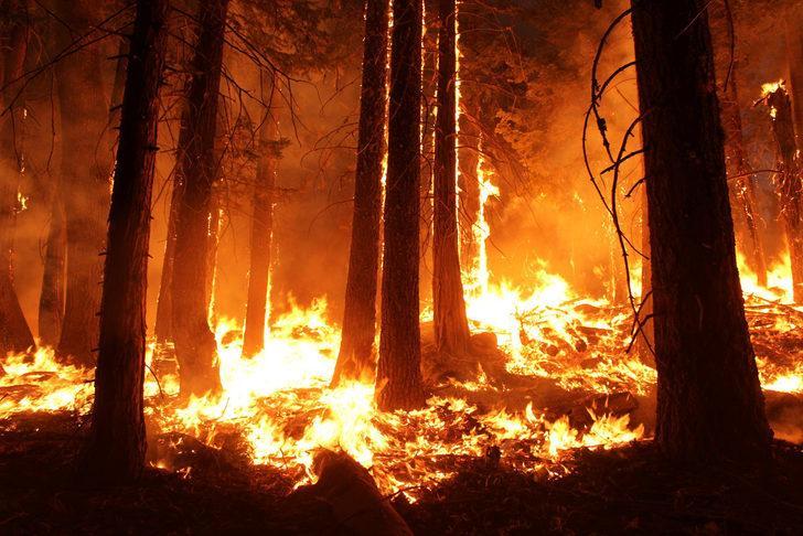 Garip iddia: Yangınları çevreciler çıkarıyor olabilir!