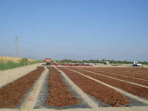 """Türkiye'nin üretim ve ihracatında dünya lideri olduğu, geleneksel ihraç ürünlerinden çekirdeksiz kuru üzüm için Tarım ve Orman Bakanı Bekir Pakdemirli tarafından açıklanan 10 TL'lik minimum fiyat; üretici, tüccar ve ihracatçıyı memnun etti. Ege Kuru Meyve ve Mamulleri İhracatçıları Birliği Yönetim Kurulu Başkanı Birol Celep, """"Bu yaklaşım, Türkiye'ye yeni sezonda en az 70-80 milyon dolar daha fazla döviz kazandıracak"""" dedi."""