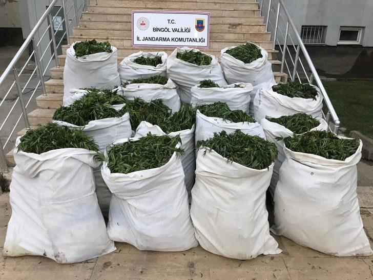 Bingöl'de, 1 ton 280 kilo esrar ile 501 bin 700 kök Hint keneviri ele geçirildi