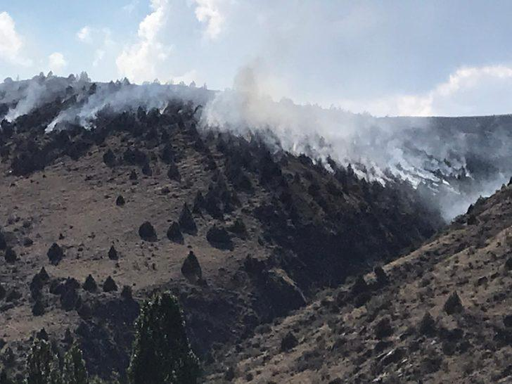 Sarıkamış'ta orman yangını
